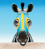 Stripes (voiced by Frankie Muniz) in Racing Stripes